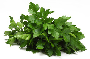 Fresh Cilantro Leaves