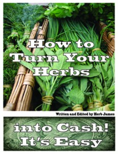 Growing Herbs For Cash